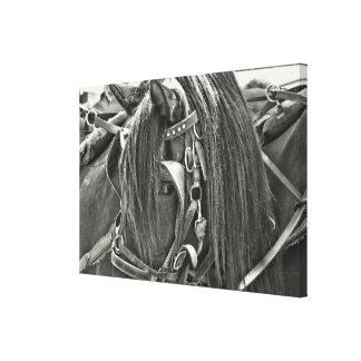CABALLO de CARRO impresión de 24 x 16 lonas