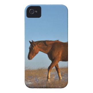 Caballo de la pradera funda para iPhone 4 de Case-Mate