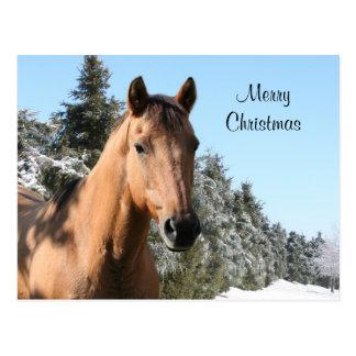 Caballo de las Felices Navidad Postal