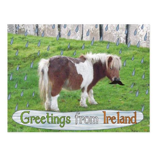 Caballo divertido en las postales irlandesas de la