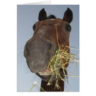 caballo divertido que come la tarjeta