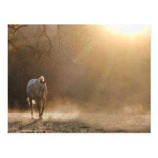 Caballo en la postal de la luz del sol
