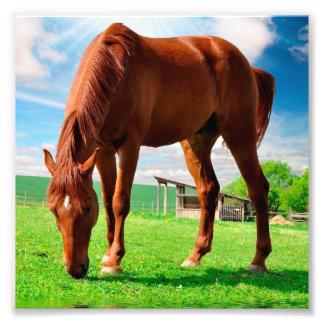 caballo que come la hierba cojinete