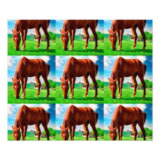 caballo que come la hierba fotografias