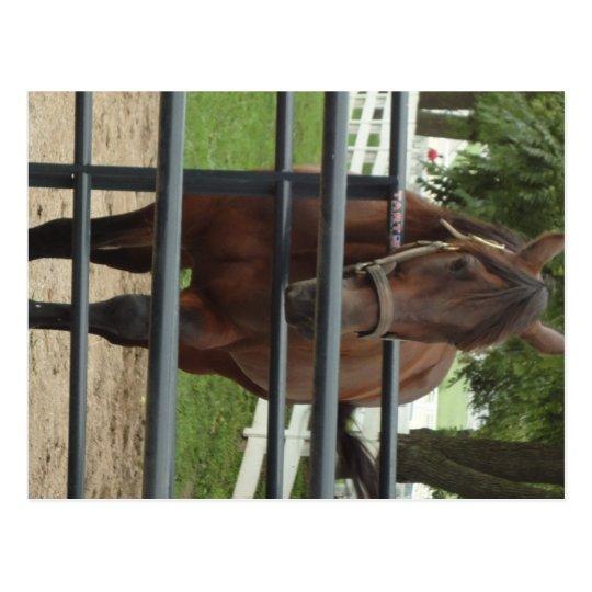 caballo sonriente postal