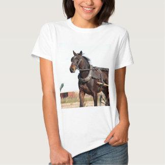 Caballo y cochecillo rurales de Amish Camisas