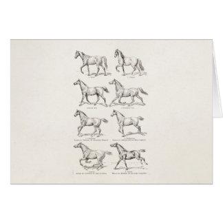 Caballos del ejemplo de los pasos del caballo de tarjeta pequeña