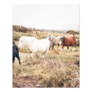 Caballos en la naturaleza folleto 11,4 x 14,2 cm