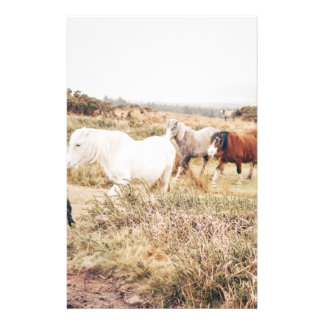 Caballos en la naturaleza folleto 14 x 21,6 cm