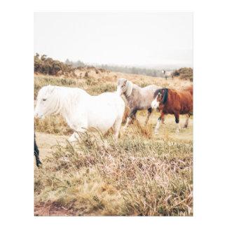 Caballos en la naturaleza folleto 21,6 x 28 cm