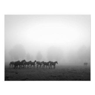 Caballos y niebla anuncios