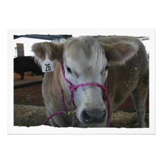 Cabeza blanca de la vaca tirada en la feria del co comunicado personalizado