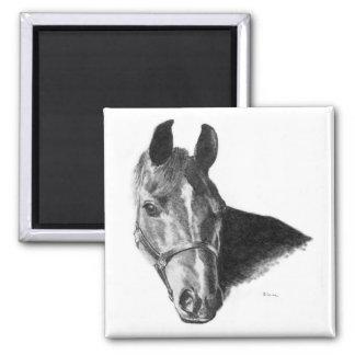 Cabeza de caballo del grafito imán cuadrado