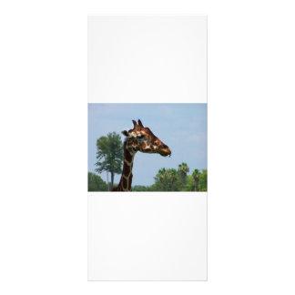 Cabeza de la jirafa contra imagen de la fotografía folleto publicitario 10 x 22,8 cm