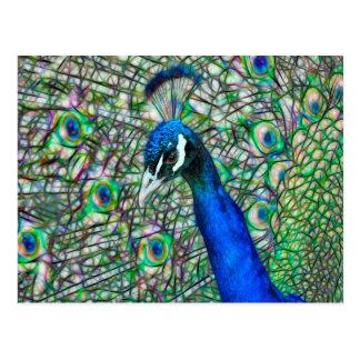 Cabeza electrificada del pavo real postal
