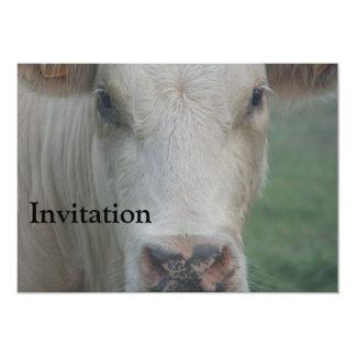 Cabeza grande de la vaca comunicado personalizado