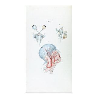 Cabeza humana y ojos de la anatomía del ejemplo lienzo