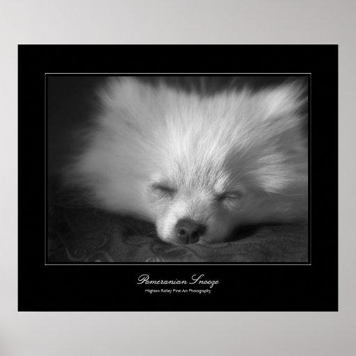 Cabezada de Pomeranian, galería-estilo de la bella Poster