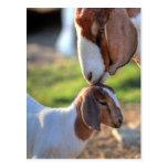 Cabra de la madre que besa a su bebé en la cabeza postal