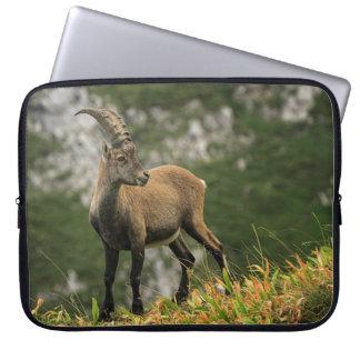 Cabra montés salvaje, o steinbock alpino, del funda para ordenador