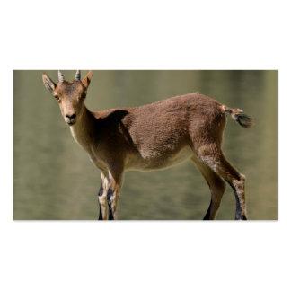 Cabra salvaje femenina joven cabra montés ibérico plantilla de tarjeta de visita