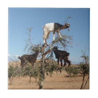 Cabras divertidas en un árbol azulejo cuadrado pequeño