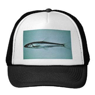 Cacho delgado gorras