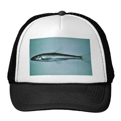 Cacho delgado gorra