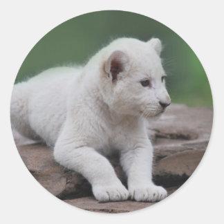 Cachorro de león blanco del bebé 2 etiqueta redonda