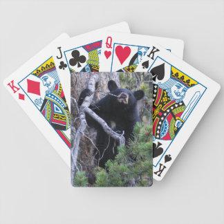 cachorro de oso negro barajas de cartas
