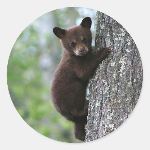 Cachorro de oso pegatina redonda