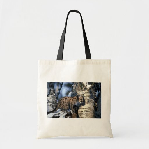 cachorro Puma-joven en árbol nevoso Bolsa