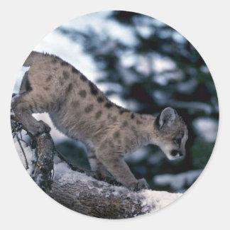 cachorro Puma-joven en árbol nevoso Pegatina Redonda