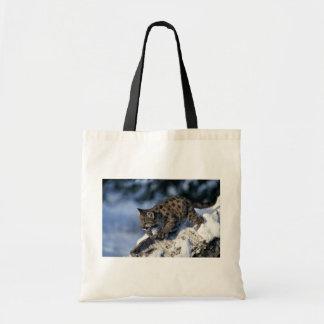 cachorro Puma-joven en un árbol nevoso Bolsa