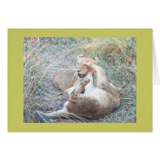 Cachorros de león de lucha tarjeta