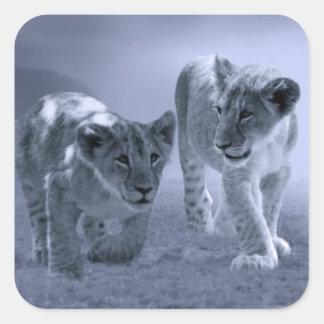 Cachorros de león del bebé en el juego pegatina cuadrada