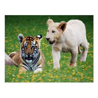 Cachorros del león y de tigre en el juego tarjeta postal