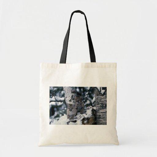 cachorros Puma-jovenes en árbol nevoso Bolsas