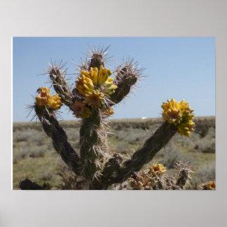 Cactus floreciente de Choyo en Colorado meridional Póster