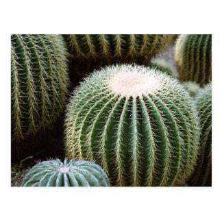 Cactus redondos postal