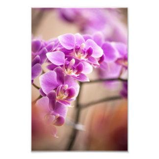 Cadena de flor de color rosa oscuro de la orquídea foto