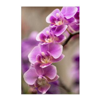Cadena de flor de color rosa oscuro de la orquídea impresión acrílica