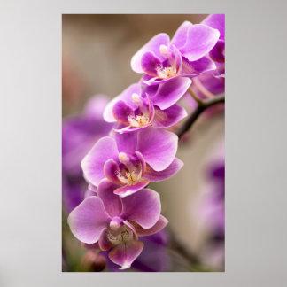 Cadena de flor de color rosa oscuro de la orquídea póster