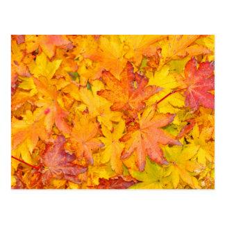 Caída decorativa roja y amarilla de las hojas de tarjeta postal