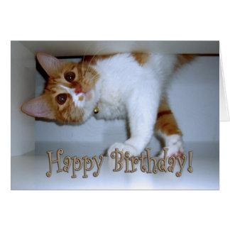 ¡Caída en gatito - feliz cumpleaños! Tarjeta De Felicitación