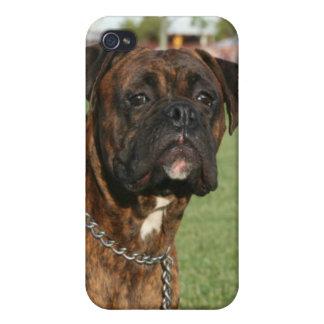 Caja Brindle de la mota del perro del boxeador iPhone 4/4S Funda