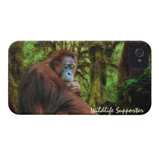 Caja de Blackberry del orangután y de la fauna de iPhone 4 Carcasa