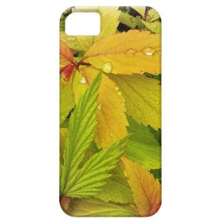 Caja de oro de las hojas iPhone 5 Case-Mate carcasas