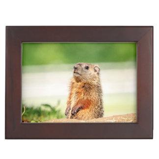 Caja De Recuerdos Groundhog joven