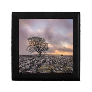Caja De Regalo árbol en el cielo